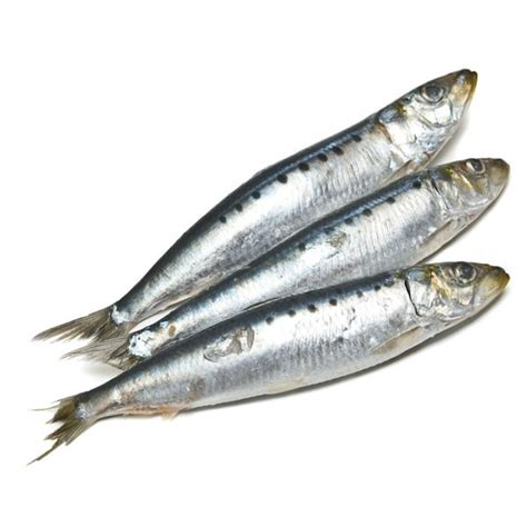 Sardines/Pilchards, Whole   Gourmet Seafood Online, NZ