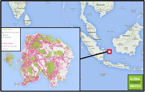 tin mining palm oil plantations wreaking havoc  small