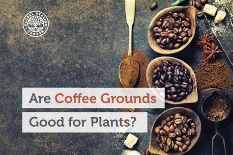 Are Coffee Grounds Good For Plants? Gifts For Coffee Lovers Sydney Station Crawford Tx On Counter Diy Furniture Office Photos Dimensions Kanda