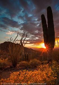 Resume With Photo Attached Desert Sunset Saguaro National Park Arizona Ed Leckert