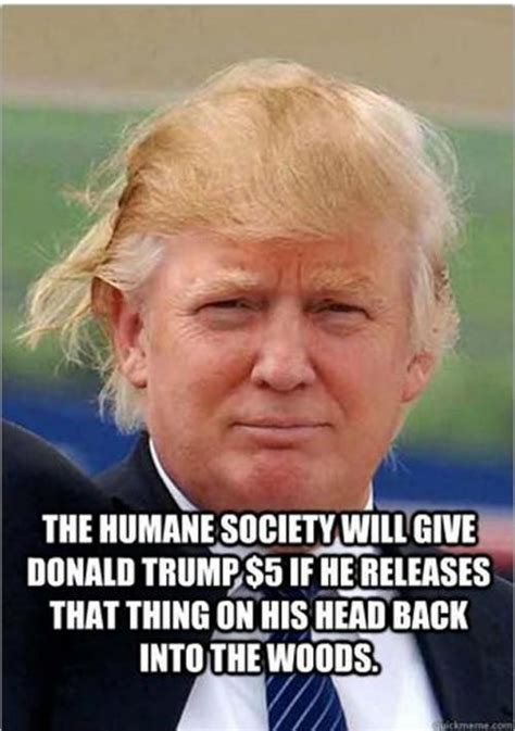 Donald Trump Hair Memes - 72 best images about donald trump humor on pinterest donald trump donald o connor and clowns