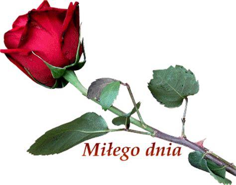 Róża wiatru