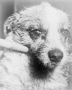 Rabies - Wikipedia