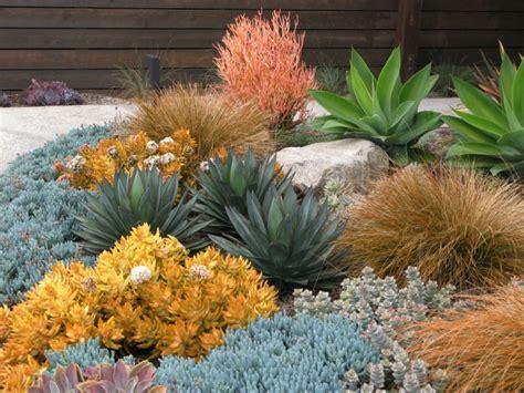 succulent landscaping 18 succulent garden designs ideas design trends premium psd vector downloads