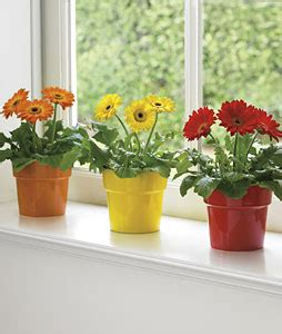Indoor Windowsill Flowers by Best Indoor Plants To Reduce Pollution