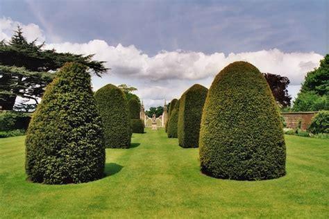 Yew Trees As Bonsai  Swindon & District Bonsai