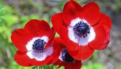 Herbst Blume Im Garten by Beliebte Herbstblumen Was Bl 252 Ht Auch Noch Im Herbst