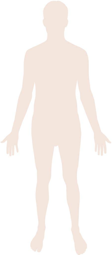Filehuman Body Silhouettesvg Wikipedia