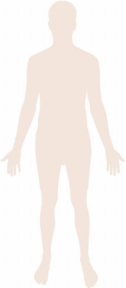 Human Silhouette Svg Wikipedia Pixels Wikimedia Commons