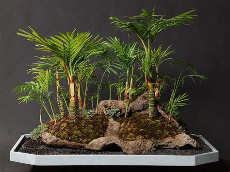 bonsai arten indoor palm indoor bonsai realpalmtrees bonsai bonsai baum bonsai und topfpflanzen