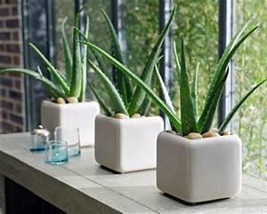 Aloe Vera Ikea : mundo ikea el blog de decoraci n con muebles de ikea ~ Preciouscoupons.com Idées de Décoration