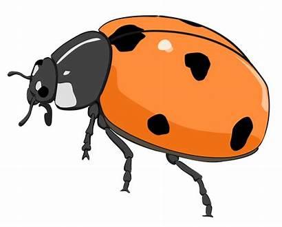 Bug Clip Clipart Ladybug Lady Cartoon Flower