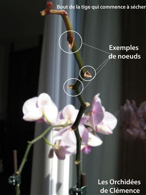 couper une orchidee latelier des fleurs