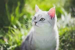 Balkonschutz Für Katzen : katzen und hitze tipps f r den sommer stories ~ Eleganceandgraceweddings.com Haus und Dekorationen