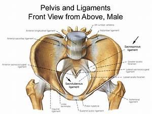 Pelvis Diagrams
