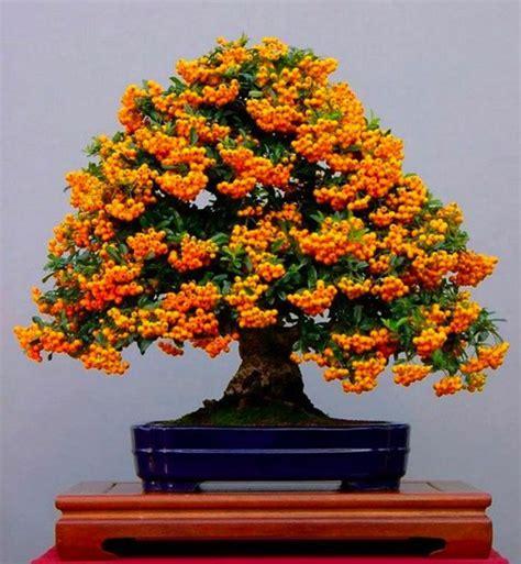 bonsai baum für draußen wundersch 246 ne bonsai baum kompositionen archzine net