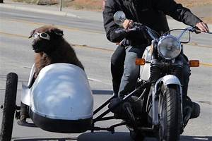 The Wacky (and Real!) Story of Sidecar Dogs