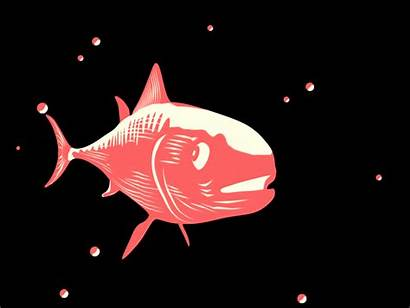 Loop Perfect Animated Animation Fish Giphy Gifs