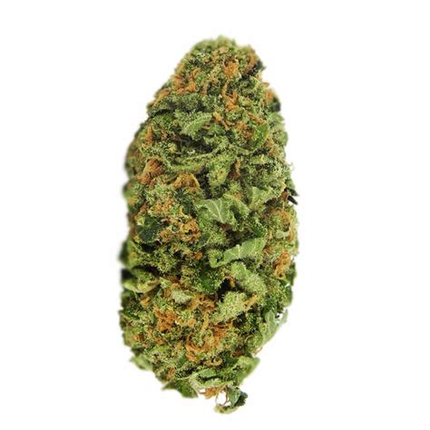 northern lights strain northern lights seeds guaranteed u s delivery