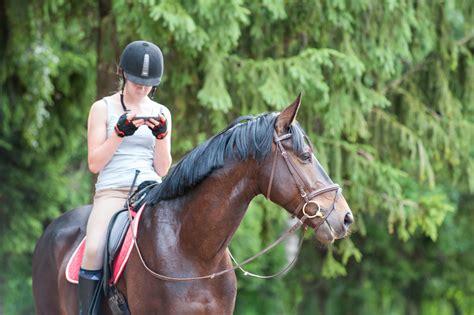 writing  horse facility job description   resource