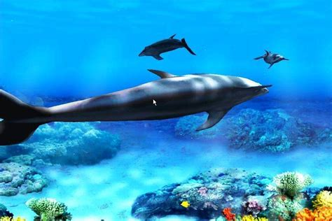 Live Animal Wallpaper Free - free dolphin wallpapers for desktop wallpaper cave