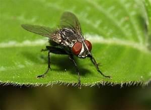 Comment Chasser Les Mouches : comment faire fuire les mouche de la maison votre ~ Melissatoandfro.com Idées de Décoration