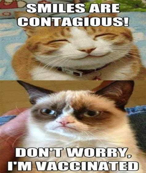 Image  Grumpycatsmilesarecontagiousjpg  Animal Jam