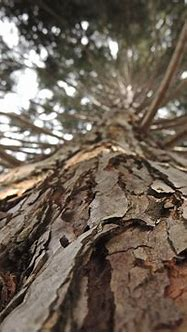 Image result for brown aesthetic   Brown Aesthetic ...