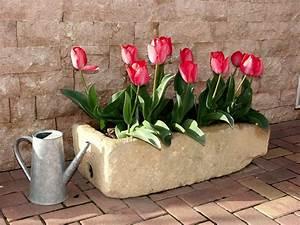 Wann Balkon Bepflanzen : como cuidar de tulipas tudo o que precisa saber blog giuliana flores ~ Frokenaadalensverden.com Haus und Dekorationen