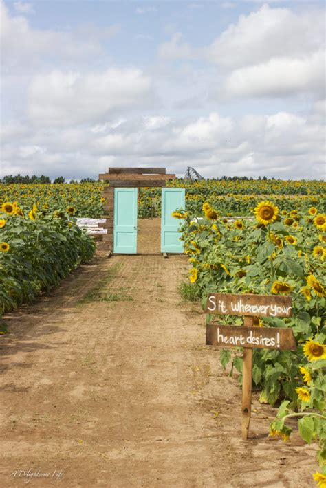 a wedding in a sunflower field a delightsome