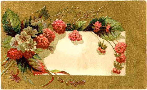 vintage raspberry label  graphics fairy