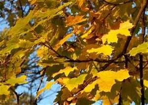 Kleine Bäume Für Den Vorgarten : b ume kleine b ume hausb ume pflanzen f r die vorgartengestaltung baumlexikon laubb ume zur ~ Sanjose-hotels-ca.com Haus und Dekorationen