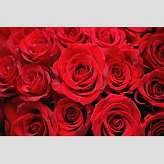 History Of Valentine's Day  Facts, Origins & Traditions History