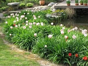 Mein Schöner Garten Mondkalender : tulpen und taglilien mein sch ner garten blumenbeet pinterest sch ne g rten tulpe und ~ Whattoseeinmadrid.com Haus und Dekorationen