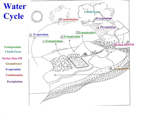 fill   blank water cycle diagram worksheet