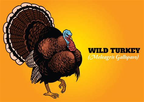 Royalty Free Turkey Hunting Cartoon Clip Art, Vector