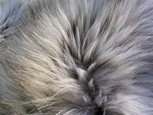 Image Gallery wolf fur
