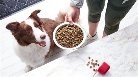 dog food  sensitive stomach issues
