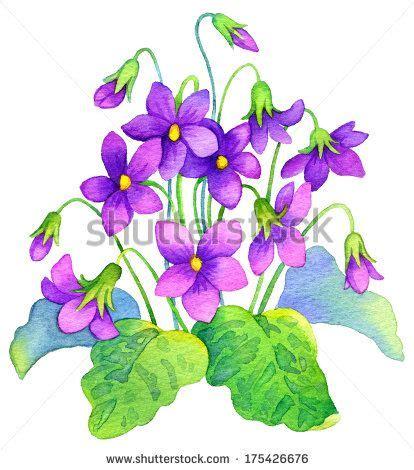 violets clip search violets and violets