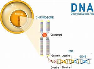 Discovery Through Dna