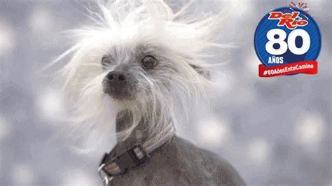 wind windy gifs tenor