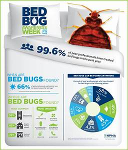 new bed bug data survey finds bed bug infestations spike With bed bug safety