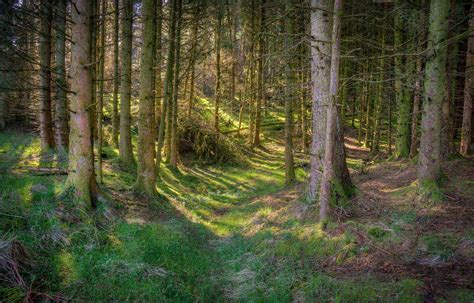 Best Walks In Forest Of Bowland