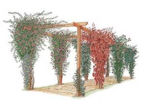 Pergola with Climbing Plants