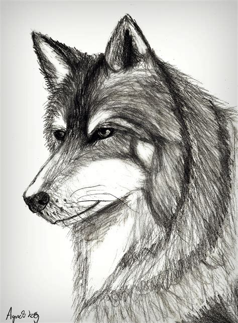 realistic wolf drawing agnesu   feb
