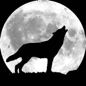 Wolf tattoos on Pinterest   Angry Wolf, Wolves and Wolf ...