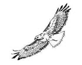 Flying Hawk Drawings