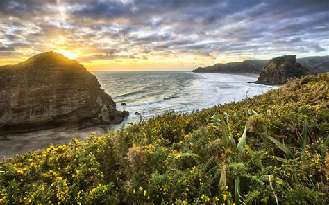top   cliff  piha beach   zealand