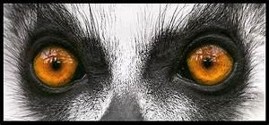 Lemur eyes. | Shrine to all things wonderful and nerdy ...