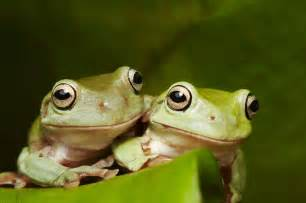 how to do a wedding program green tree frog habitat diet reproduction sydney